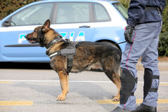 Canine Unit of the Italian police for the detection of explosive Royalty Free Stock Photos