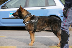 Canine Unit of the police for the detection of explosive materia Stock Photography