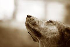 Caninity Stock Image