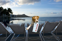 Canino em férias. imagem de stock