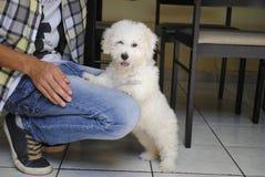 Canino + lui fotografia stock