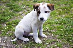 Canino sveglio Fotografie Stock