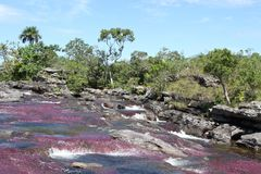 Canio Cristales bergflod. Colombia Royaltyfri Foto