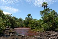 Canio Cristales góry rzeka. Kolumbia Zdjęcia Stock