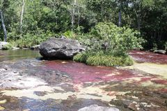 Canio Cristales mountain river. Colombia Stock Image
