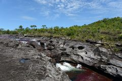 Canio Cristales mountain river. Colombia Stock Images