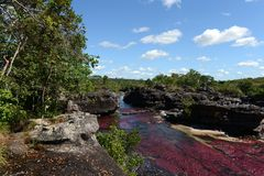 Canio Cristales mountain river. Colombia Stock Photo