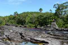 Canio Cristales mountain river. Colombia Stock Photography