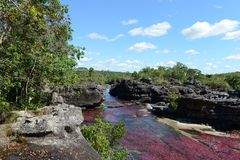 Canio Cristales mountain river. Colombia. The most beautiful river on Earth Stock Photo