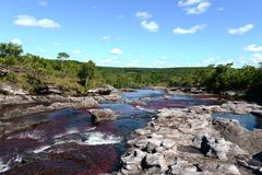 Canio Cristales mountain river. Colombia. The most beautiful river on Earth Stock Photos