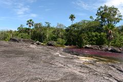 Canio Cristales mountain river. Colombia. The most beautiful river on Earth Royalty Free Stock Photo