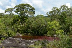 Canio Cristales mountain river. Colombia Royalty Free Stock Images