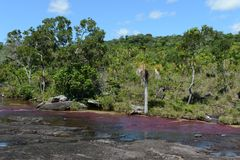canio rzeka w Kolumbia Zdjęcie Stock