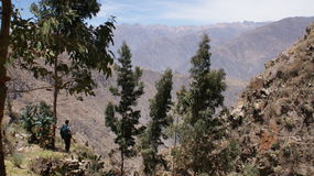 Canion Colca, Peru Stock Images