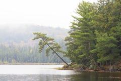 Canisbay湖在阿尔根金族公园 免版税库存照片