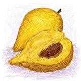 Canistel Frucht, ganz und Hälfte geschnitten Lizenzfreie Stockbilder