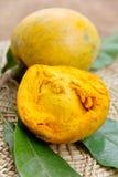 Canistel frukt Arkivbilder