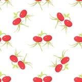 Cankerberries Naadloos Patroon Stock Afbeeldingen