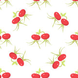 Cankerberries Seamless Pattern Stock Images