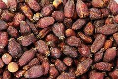 cankerberry ξηρός ανασκόπησης Στοκ Εικόνες