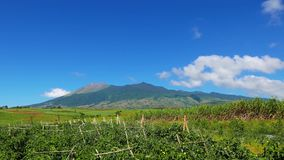Canlaon volcano view from fields timelapse stock video footage