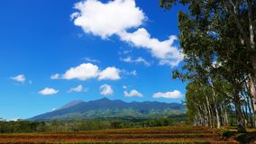Canlaon Volcano View from Rice Paddies 07 stock video footage