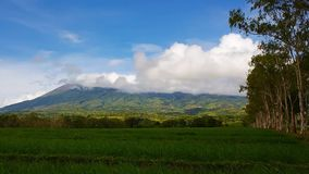 Canlaon Volcano view from rice paddies stock video footage