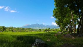 Canlaon volcano view from rice paddies timelapse stock footage