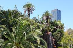 Canna在洛杉矶 免版税库存照片