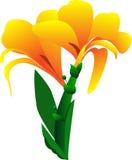 Canna blomma på vitbakgrund Royaltyfri Bild