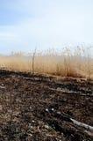 Canna bruciata su una spiaggia del lago Prespa, Macedonia Fotografie Stock Libere da Diritti