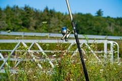 Canna da pesca e bobina con la linea su sfondo naturale verde immagine stock libera da diritti