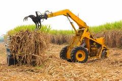 Canna da zucchero del raccolto. Fotografie Stock Libere da Diritti