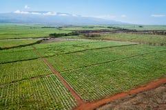 Canna da zucchero di Maui Fotografia Stock