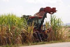 canna da zucchero di taglio della mietitrice sui campi ed agricolo sotto il cielo blu Fotografie Stock