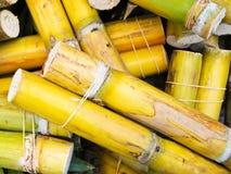 Canna da zucchero fresca Fotografia Stock