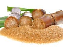Canna da zucchero isolata su fondo bianco Fotografia Stock Libera da Diritti