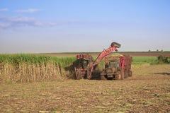 Canna da zucchero - trattore e canna da zucchero di mietitrebbiatura Fotografia Stock