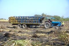 Canna dell'impilatore per l'agricoltore in Tailandia Fotografie Stock
