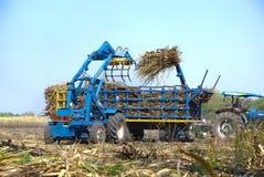 Canna dell'impilatore per l'agricoltore in Tailandia Immagine Stock