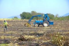 Canna dell'impilatore per l'agricoltore in Tailandia Immagine Stock Libera da Diritti