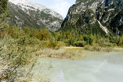 Canna della regione paludosa delle dolomia del lago toblach Fotografia Stock