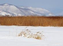 Canna di inverno Fotografie Stock Libere da Diritti
