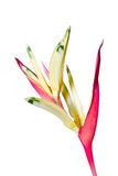 Canna Stock Images