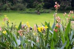 Canna-Lilienblumen Lizenzfreies Stockbild