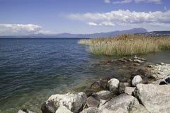 Canna nel lago garda, Italia Fotografia Stock Libera da Diritti