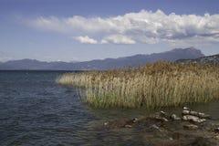 Canna nel lago garda, Italia Immagine Stock Libera da Diritti