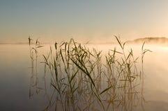 Canna sul lago Immagine Stock