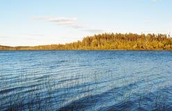 Canna verde sul lago blu Immagini Stock Libere da Diritti