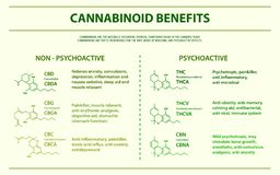 Cannabinoid benefits horizontal infographic royalty free illustration